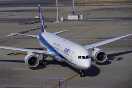 K OOKAWAさんが、ヘンダーソン・エクゼクティブ空港で撮影した全日空 787-9の航空フォト(飛行機 写真・画像)
