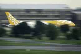 planetさんが、ドンムアン空港で撮影したスクート 787-8 Dreamlinerの航空フォト(飛行機 写真・画像)