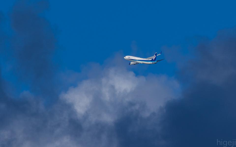 ひげじいさんの全日空 Boeing 737-800 (JA56AN) 航空フォト