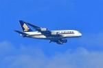 @あきやんさんが、関西国際空港で撮影したシンガポール航空 A380-841の航空フォト(写真)