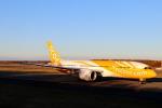 funi9280さんが、新千歳空港で撮影したスクート 787-8 Dreamlinerの航空フォト(飛行機 写真・画像)