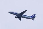 mild lifeさんが、伊丹空港で撮影した全日空 A320-211の航空フォト(写真)