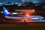 いっち〜@RJFMさんが、宮崎空港で撮影した全日空 737-8ALの航空フォト(写真)