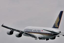 NALUさんが、関西国際空港で撮影したシンガポール航空 A380-841の航空フォト(飛行機 写真・画像)