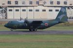 キイロイトリさんが、名古屋飛行場で撮影した航空自衛隊 C-130H Herculesの航空フォト(写真)
