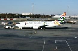 yoshibouさんが、ジョン・F・ケネディ国際空港で撮影したケイマン航空 737-36Eの航空フォト(写真)