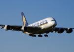 szkkjさんが、成田国際空港で撮影したシンガポール航空 A380-841の航空フォト(写真)