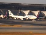 なまくら はげるさんが、スワンナプーム国際空港で撮影したエル・アル航空 747-400の航空フォト(写真)