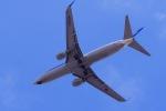 リンリンさんが、伊丹空港で撮影した全日空 737-881の航空フォト(写真)