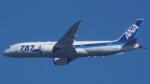 otromarkさんが、八尾空港で撮影した全日空 787-8 Dreamlinerの航空フォト(写真)