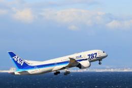 ゆなりあさんが、中部国際空港で撮影した全日空 787-8 Dreamlinerの航空フォト(飛行機 写真・画像)