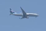 kuro2059さんが、中部国際空港で撮影した全日空 737-881の航空フォト(飛行機 写真・画像)