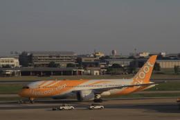 しかばねさんが、ドンムアン空港で撮影したスクート 787-8 Dreamlinerの航空フォト(飛行機 写真・画像)