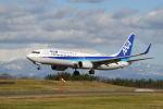 だだちゃ豆さんが、庄内空港で撮影した全日空 737-881の航空フォト(写真)