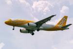 delawakaさんが、シンガポール・チャンギ国際空港で撮影したスクート A320-232の航空フォト(写真)