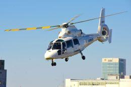 まいけるさんが、東京ヘリポートで撮影したエアバス・ヘリコプターズ・ジャパン AS365N2 Dauphin 2の航空フォト(飛行機 写真・画像)