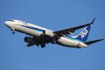 bushitsukeさんが、函館空港で撮影した全日空 737-881の航空フォト(写真)