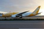 ハピネスさんが、関西国際空港で撮影したスクート 787-8 Dreamlinerの航空フォト(飛行機 写真・画像)