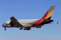 speedbirdさんが、成田国際空港で撮影したアシアナ航空 A380-841の航空フォト(飛行機 写真・画像)