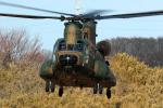 AkiChup0nさんが、習志野演習場で撮影した陸上自衛隊 CH-47JAの航空フォト(写真)