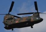 チャーリーマイクさんが、習志野演習場で撮影した陸上自衛隊 CH-47JAの航空フォト(写真)