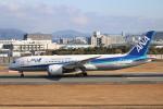 水月さんが、伊丹空港で撮影した全日空 787-8 Dreamlinerの航空フォト(写真)
