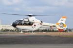 MiYABiさんが、徳島空港で撮影した海上自衛隊 TH-135の航空フォト(写真)