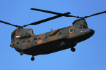 AkiChup0nさんが、習志野演習場で撮影した陸上自衛隊 CH-47Jの航空フォト(写真)