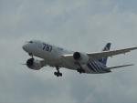485k60さんが、福岡空港で撮影した全日空 787-8 Dreamlinerの航空フォト(飛行機 写真・画像)