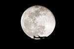 AkiChup0nさんが、羽田空港で撮影したジェイ・エア ERJ-190-100(ERJ-190STD)の航空フォト(写真)