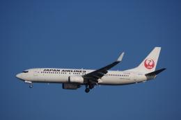 JA8037さんが、羽田空港で撮影した日本航空 737-846の航空フォト(写真)