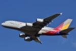camelliaさんが、成田国際空港で撮影したアシアナ航空 A380-841の航空フォト(写真)
