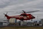 とびたさんが、東京ヘリポートで撮影した東京消防庁航空隊 EC225LP Super Puma Mk2+の航空フォト(写真)
