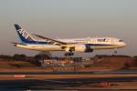 安芸あすかさんが、成田国際空港で撮影した全日空 787-8 Dreamlinerの航空フォト(写真)