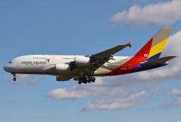 あしゅーさんが、成田国際空港で撮影したアシアナ航空 A380-841の航空フォト(写真)