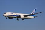 けいとパパさんが、成田国際空港で撮影した全日空 787-8 Dreamlinerの航空フォト(写真)