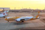 T.Sazenさんが、関西国際空港で撮影したスクート 787-8 Dreamlinerの航空フォト(飛行機 写真・画像)