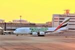 JA946さんが、関西国際空港で撮影したエミレーツ航空 A380-861の航空フォト(写真)