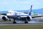 John Doeさんが、伊丹空港で撮影した全日空 787-8 Dreamlinerの航空フォト(写真)