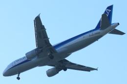 八丈島空港 - Hachijo Jima Airport [HAC/RJTH]で撮影された八丈島空港 - Hachijo Jima Airport [HAC/RJTH]の航空機写真