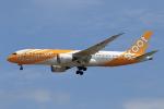 ★azusa★さんが、シンガポール・チャンギ国際空港で撮影したスクート 787-8 Dreamlinerの航空フォト(写真)