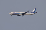 Cスマイルさんが、成田国際空港で撮影した全日空 737-881の航空フォト(写真)