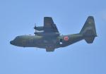 雲霧さんが、習志野演習場で撮影した航空自衛隊 C-130H Herculesの航空フォト(写真)