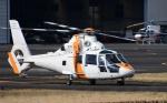 Mizuki24さんが、東京ヘリポートで撮影した東邦航空 SA365N1 Dauphin 2の航空フォト(写真)