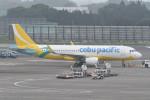 kuro2059さんが、成田国際空港で撮影したセブパシフィック航空 A320-214の航空フォト(写真)
