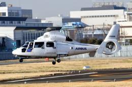 kamerajiijiさんが、東京ヘリポートで撮影したエアバス・ヘリコプターズ・ジャパン AS365N2 Dauphin 2の航空フォト(飛行機 写真・画像)