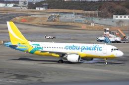OS52さんが、成田国際空港で撮影したセブパシフィック航空 A320-214の航空フォト(飛行機 写真・画像)