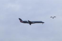 しかばねさんが、ジョン・F・ケネディ国際空港で撮影したアメリカン・イーグル ERJ-140LRの航空フォト(飛行機 写真・画像)