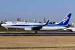 冷やし中華始めましたさんが、伊丹空港で撮影した全日空 737-881の航空フォト(写真)