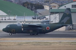 M.A.airphotoさんが、名古屋飛行場で撮影した航空自衛隊 C-130H Herculesの航空フォト(飛行機 写真・画像)